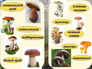 лисички подберёзовик мухомор подосиновик белый гриб Бледная поганка ложные оп