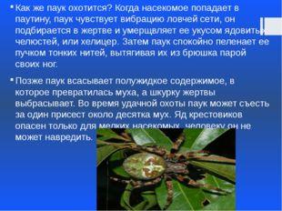 Как же паук охотится? Когда насекомое попадает в паутину, паук чувствует вибр