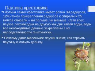 Паутина крестовика Паутина самки крестовика имеет ровно 39 радиусов, 1245 точ