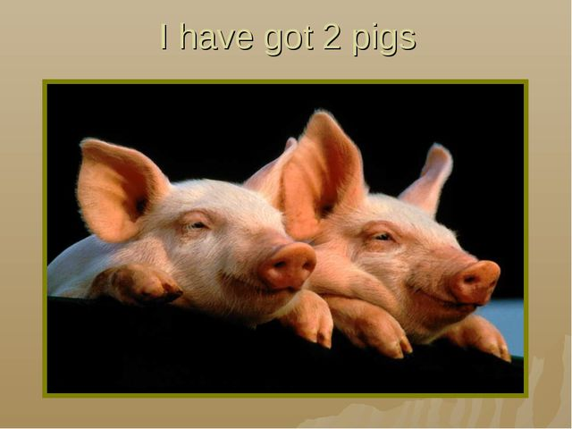 I have got 2 pigs