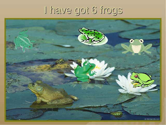 I have got 6 frogs