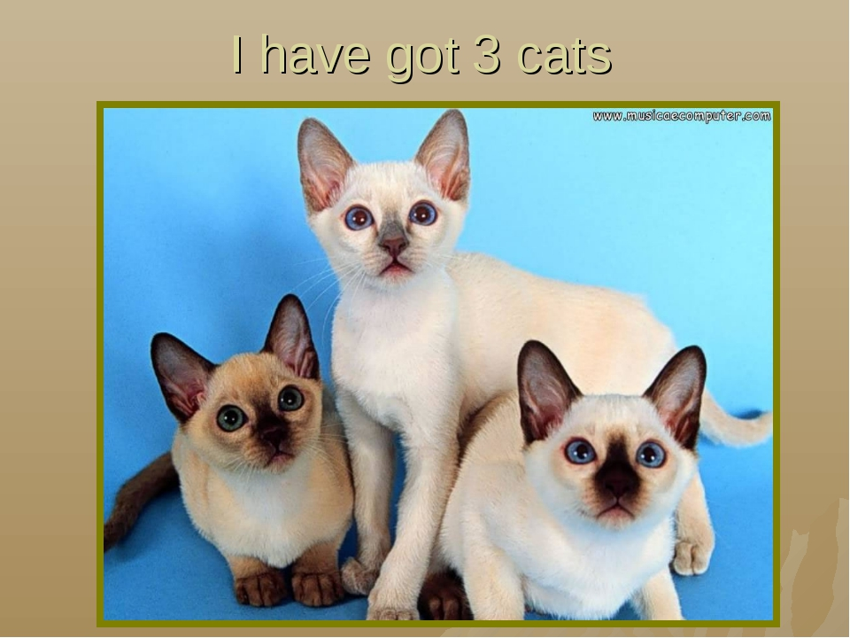 I have got 3 cats