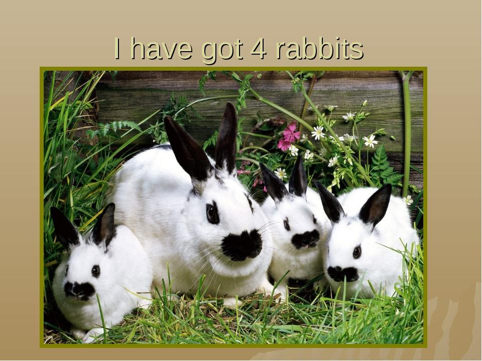 I have got 4 rabbits