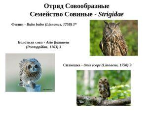 Отряд Совообразные Семейство Совиные - Strigidae Филин - Bubo bubo (Linnaeus,