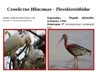 Семейство Ибисовые - Threskiornithidae Колпица - Platalea leucorodia (Linnaeu