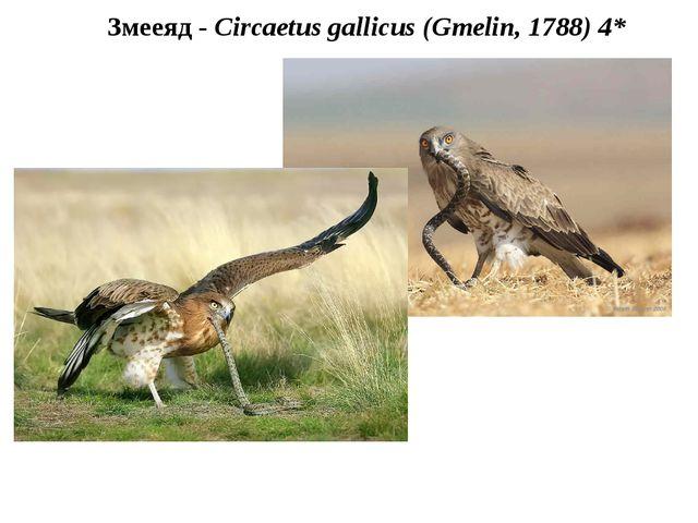 Змееяд - Circaetus gallicus (Gmelin, 1788) 4*