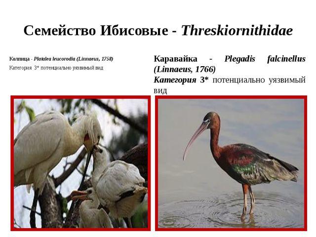 Семейство Ибисовые - Threskiornithidae Колпица - Platalea leucorodia (Linnaeu...
