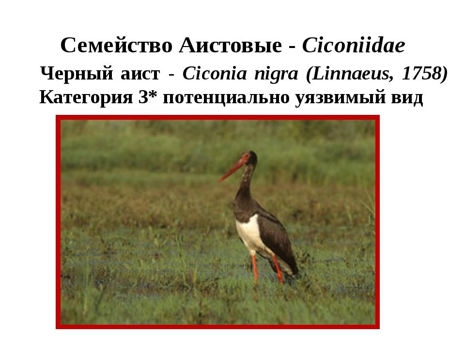 Семейство Аистовые - Ciconiidae Черный аист - Ciconia nigra (Linnaeus, 1758)...