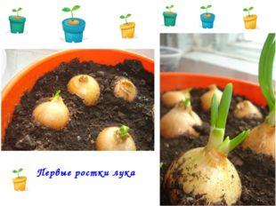 Первые ростки лука