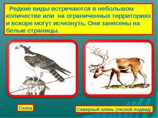 Редкие виды встречаются в небольшом количестве или на ограниченных территори