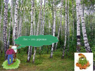 Лес – это деревья Что такое лес?