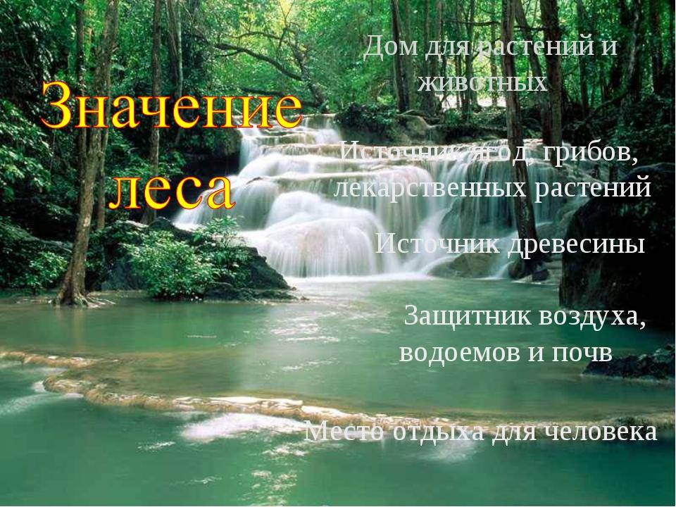 Дом для растений и животных Источник ягод, грибов, лекарственных растений Ис...