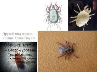 Другой вид пауков – клещи. Существуют почвенные, зерновые, мучные и чесоточн