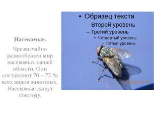 Насекомые. Чрезвычайно разнообразен мир насекомых нашей области. Они составл