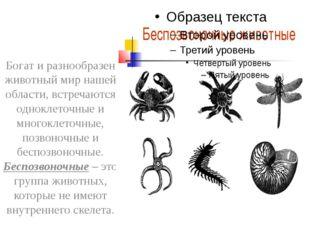 Богат и разнообразен животный мир нашей области, встречаются одноклеточные и