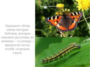 Украшают облик земли пестрые бабочки, которые опыляют растения; их личинки –