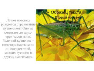 Летом повсюду раздается стрекотание кузнечиков. Оно не смолкает до двух-трех