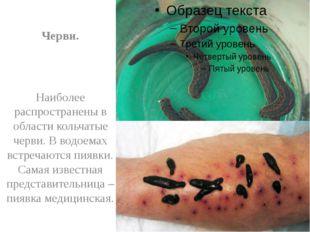 Черви. Наиболее распространены в области кольчатые черви. В водоемах встреча