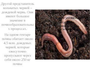 Другой представитель кольчатых червей – дождевой червь. Они имеют большое зн