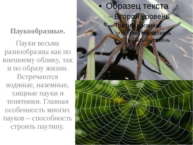 Паукообразные. Пауки весьма разнообразны как по внешнему облику, так и по об...