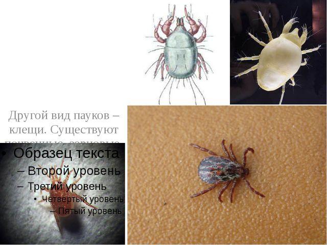 Другой вид пауков – клещи. Существуют почвенные, зерновые, мучные и чесоточн...