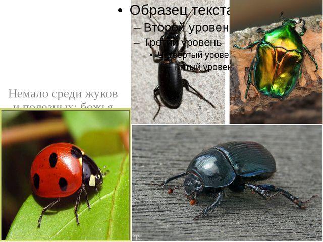 Немало среди жуков и полезных: божья коровка, жужелицы, бронзовки, жук-навоз...