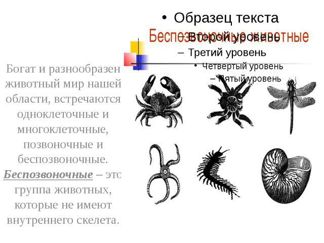 Богат и разнообразен животный мир нашей области, встречаются одноклеточные и...