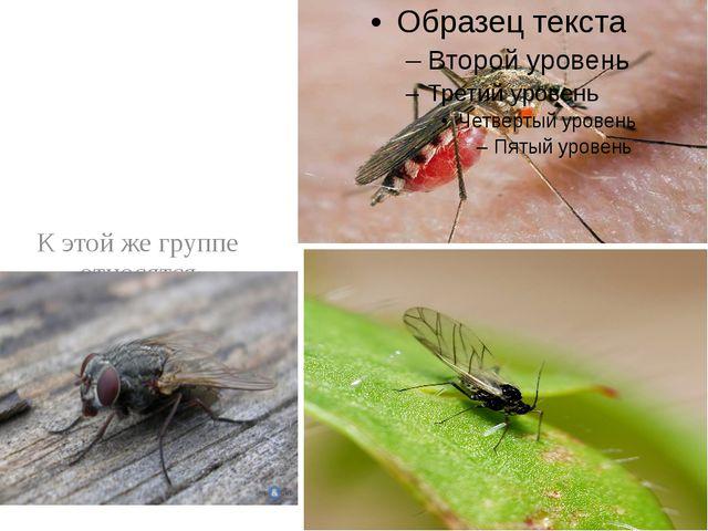 К этой же группе относятся назойливые мухи, комары, мошки.