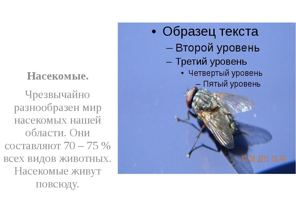 Насекомые. Чрезвычайно разнообразен мир насекомых нашей области. Они составл...