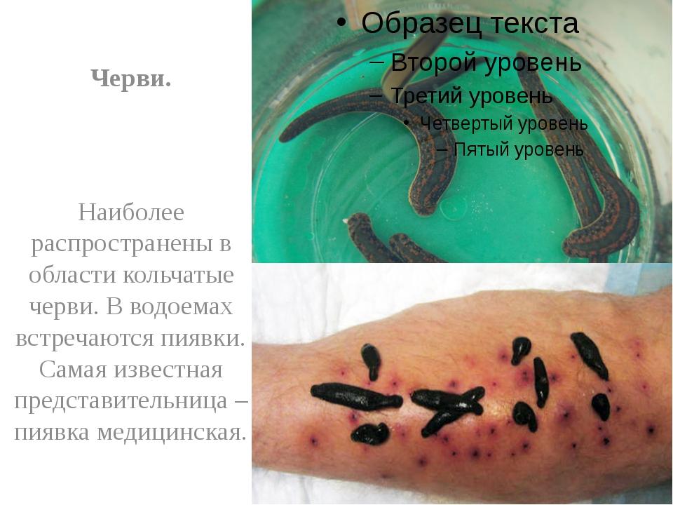Черви. Наиболее распространены в области кольчатые черви. В водоемах встреча...