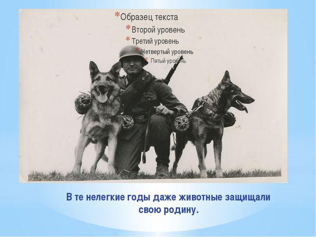 В те нелегкие годы даже животные защищали свою родину.