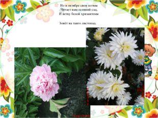 Но в октябре свои поэмы Читает нам осенний сад, И ветку белой хризантемы Зовё
