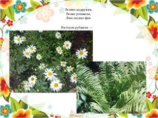 Летние подружки, Белые ромашки, Вам лесные феи Выткали рубашки — Квитка
