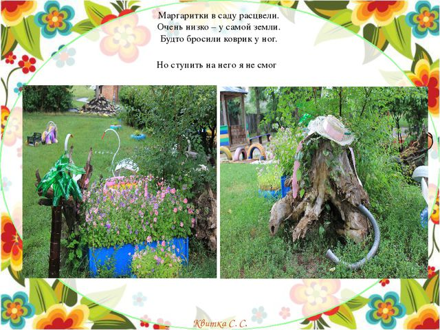 Маргаритки в саду расцвели. Очень низко – у самой земли. Будто бросили ковр...