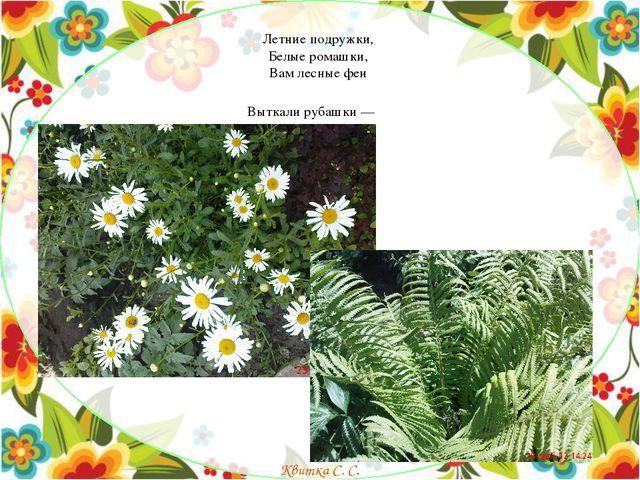 Летние подружки, Белые ромашки, Вам лесные феи Выткали рубашки — Квитка...