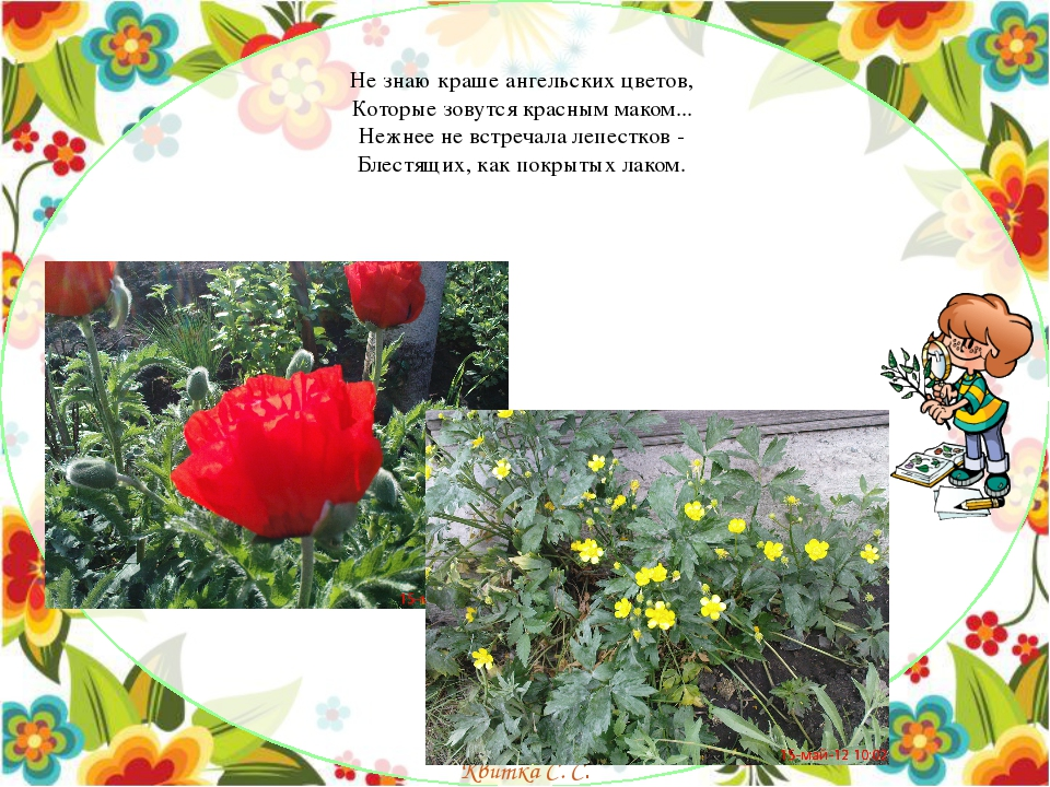 Не знаю краше ангельских цветов, Которые зовутся красным маком... Нежнее не...