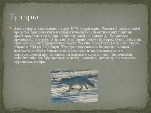 Зона тундры охватывает около 10 % территории России и находится в пределах ар