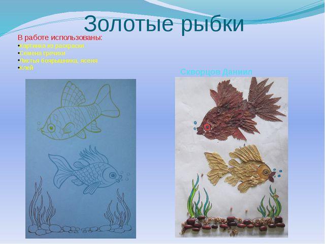 Золотые рыбки В работе использованы: Картинка из раскраски Семена гречихи Лис...