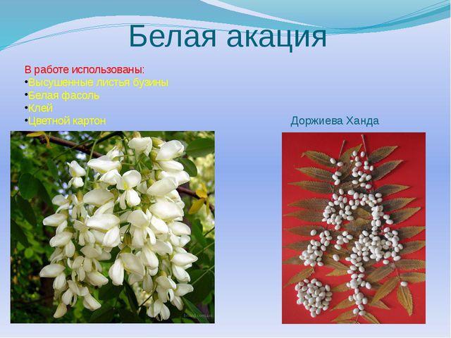 Белая акация В работе использованы: Высушенные листья бузины Белая фасоль Кле...