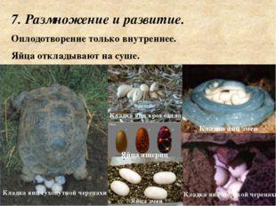 7. Размножение и развитие. Оплодотворение только внутреннее. Яйца откладываю