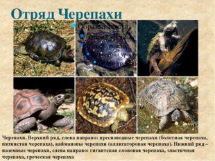 Отряд Черепахи Черепахи. Верхний ряд, слева направо: пресноводные черепахи (б