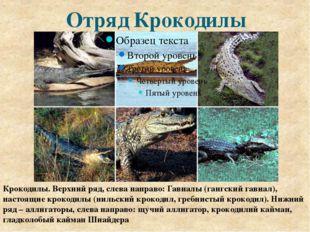 Отряд Крокодилы Крокодилы. Верхний ряд, слева направо: Гавиалы (гангский гави