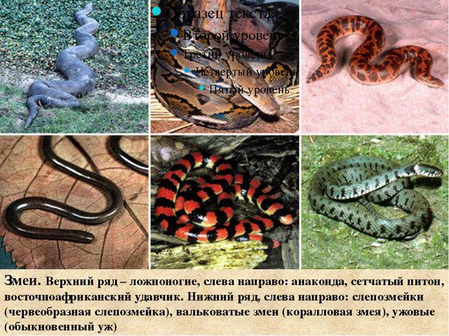 Змеи. Верхний ряд – ложноногие, слева направо: анаконда, сетчатый питон, вос...