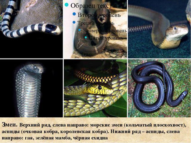Змеи. Верхний ряд, слева направо: морские змеи (кольчатый плоскохвост), аспи...