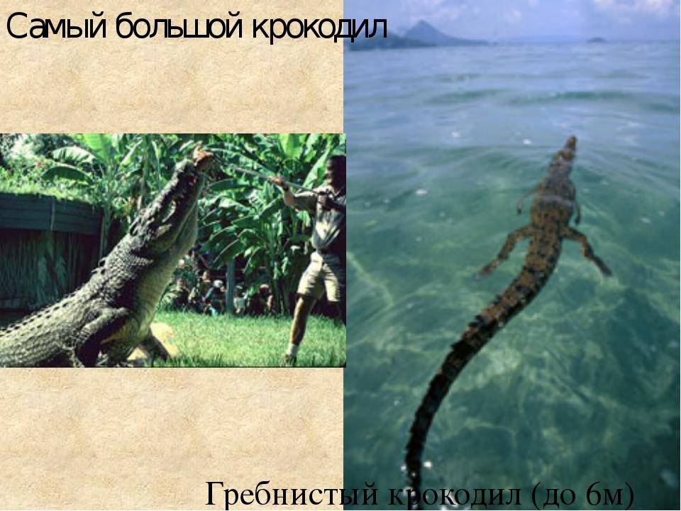 Самый большой крокодил Гребнистый крокодил (до 6м)