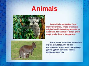 Animals Australia is separated from many countries. There are many original a