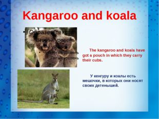 Kangaroo and koala The kangaroo and koala have got a pouch in which they carr