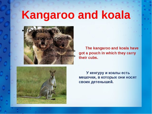 Kangaroo and koala The kangaroo and koala have got a pouch in which they carr...