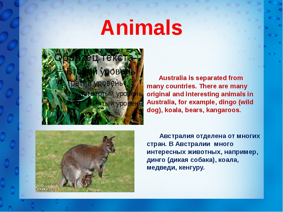 Animals Australia is separated from many countries. There are many original a...