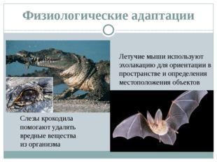 Физиологические адаптации Слезы крокодила помогают удалять вредные вещества и